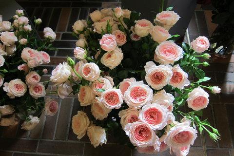 FOTKA - Putování mezi růžemi
