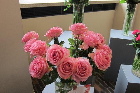 FOTKA - Růže pod okénkem Karolina
