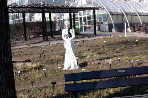 FOTKA - Bílá paní v botanické zahradě