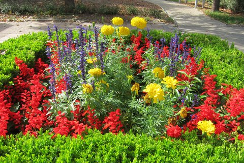 FOTKA - Květinový záhon v září