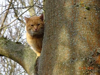 FOTKA - Kocour na stromě