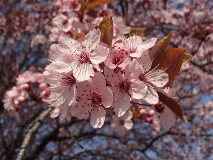 FOTKA - ružovkastá jar