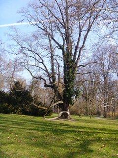FOTKA - foto  stromu z Podzám. zahrady v Kroměříži