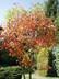 Podzim na zahradě