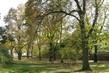 Stromy v parku.