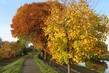 podzim a cyklostezka