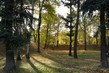 podzimní stíny mezi stromy