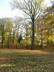 opadaný velikán-strom