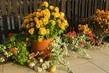 rozkvetlá terasa na podzim