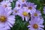 Včelka na květině