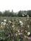 Úroda nepořádného zemědělce