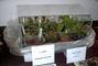 zahradkarska vystava,masozravky