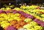 květinový koberec I.