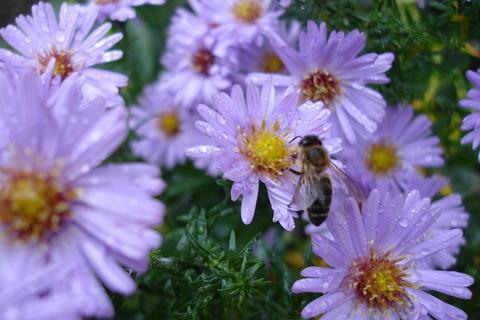 FOTKA - Včelka na květině