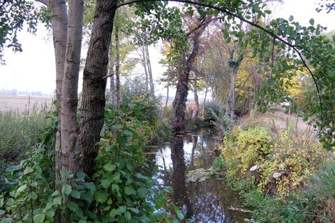 FOTKA - zarostlý potok