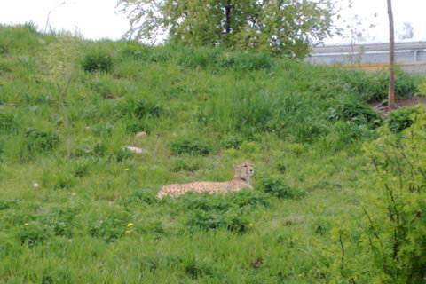 FOTKA - zoo2