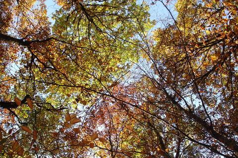 FOTKA - podzimní koruny stromů