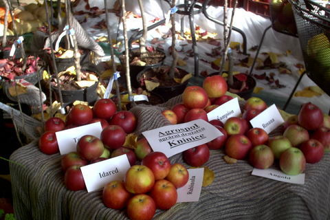 FOTKA - zahradkarska vystava,jablicka