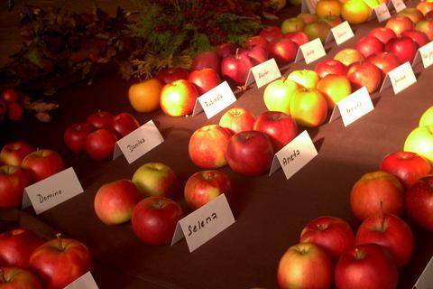 FOTKA - zahradkarska vystava,v rade