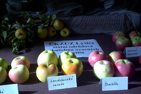 FOTKA - zahradkarska vystava,jabka z Lysic