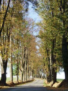 FOTKA - podzimmní alej
