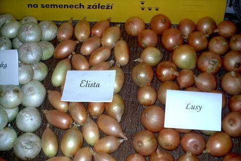 FOTKA - zahradkarska vystava,cibule