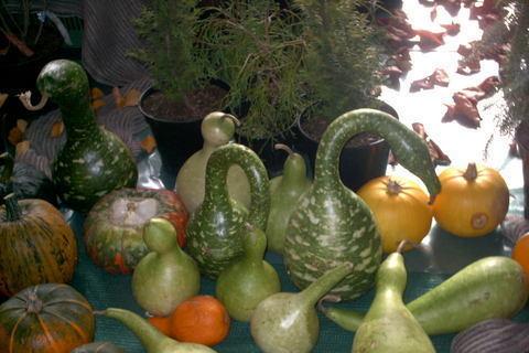 FOTKA - zahradkarska vystava,dyne2