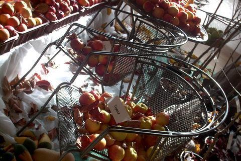 FOTKA - zahradkarska vystava,jabka na zidli