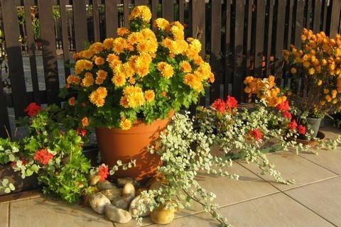 FOTKA - rozkvetlá terasa na podzim