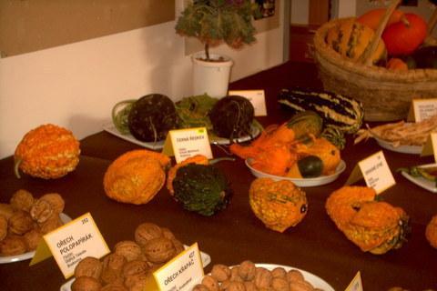 FOTKA - zahradkarska vystava,orechy atd