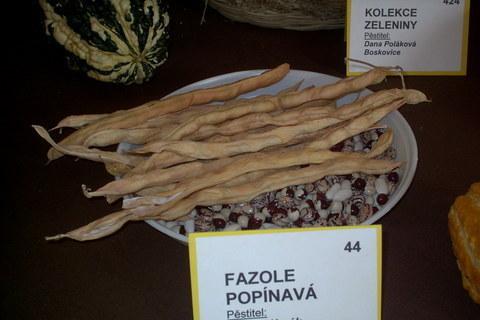 FOTKA - zahradkarska vystava,fazole