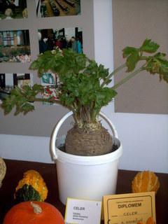 FOTKA - zahradkarska vystava,celer