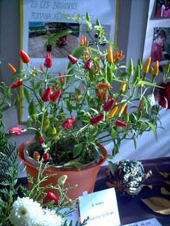 FOTKA - zahradkarska vystava,papricky