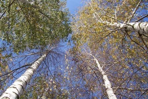 FOTKA - Podzim nad hlavou