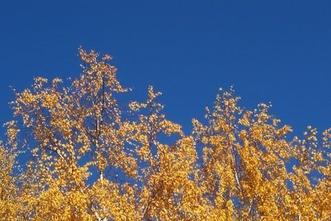 FOTKA - Podzimní ladění