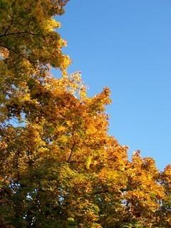 FOTKA - Podzimní kontrasty II