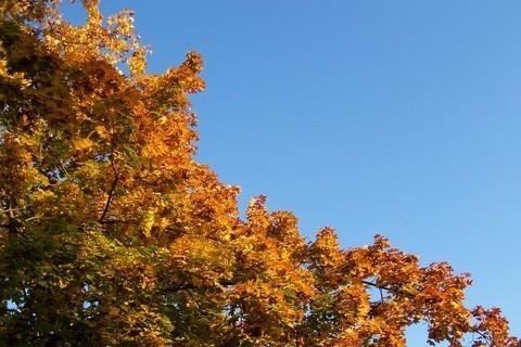 FOTKA - Podzimní kontrasty