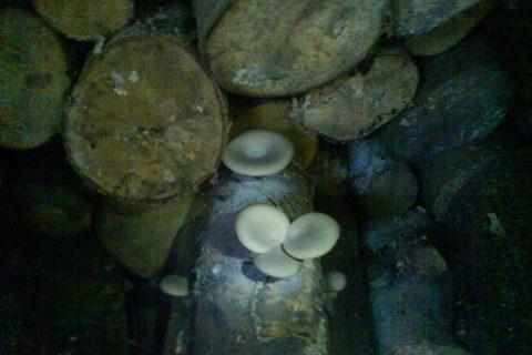 FOTKA - houby na dřevě
