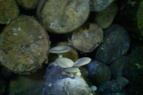 FOTKA - a ještě houby