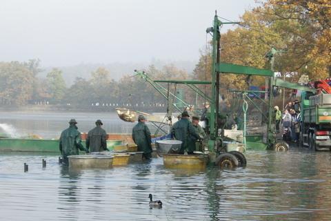 FOTKA - Munický rybník - nedělní výlov