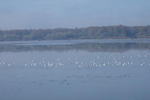 FOTKA - racci na lovu - Munický rybník