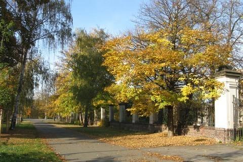 FOTKA - listí v ulicích