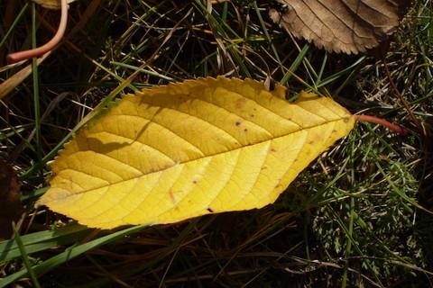 FOTKA - List podzimní
