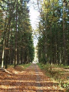 FOTKA - Podzimní den v lese
