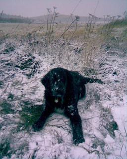 FOTKA - Ája a sníh