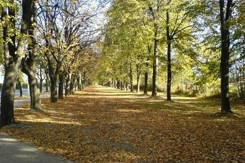 FOTKA - Podzimní alej I