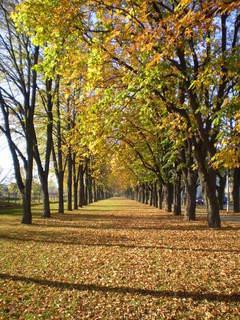 FOTKA - Podzimní alej
