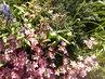 květinkový mix