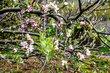 Stromek s květy