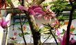 magnolie mezi budovami